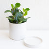 The Perfect White Pot - Small