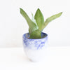 Blue Bubble Planter Small