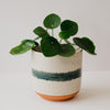 Simple Green Stripe Planter Medium