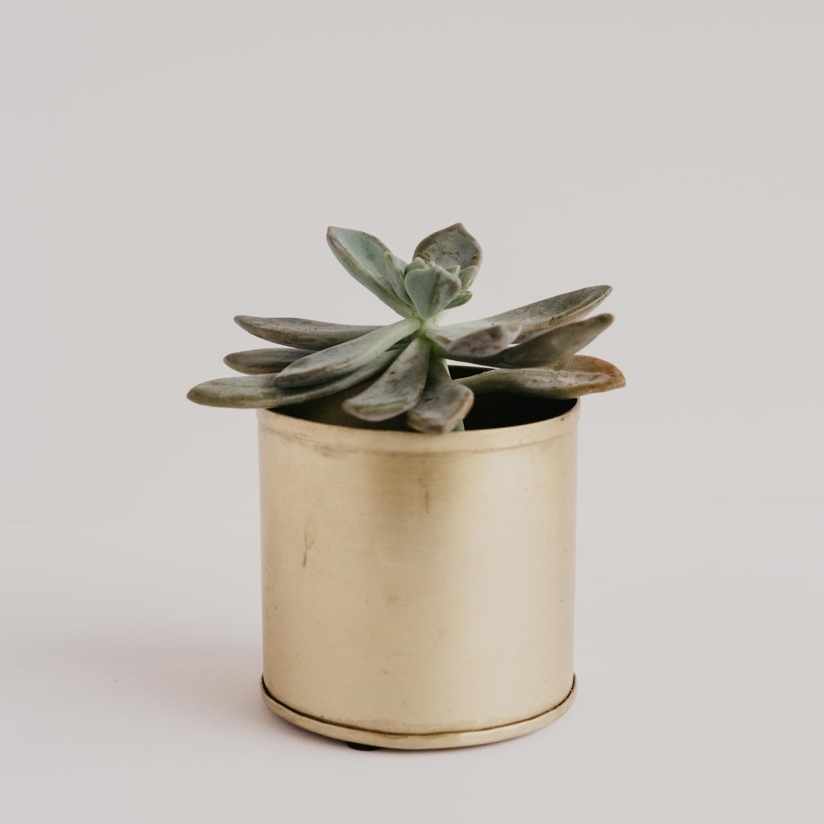 Gold Brass Planter Medium