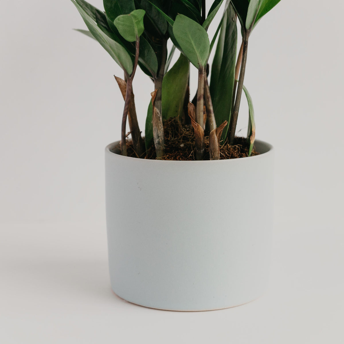 Pale Blue Palm Springs Cylinder Planter