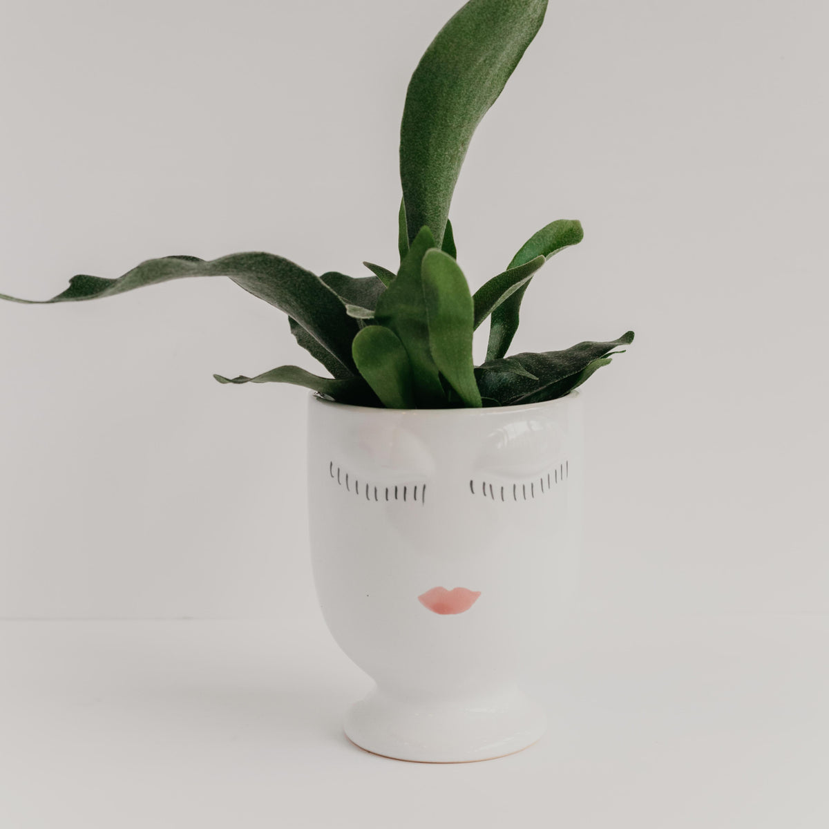 Lady Planter - Vanilla