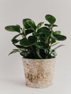 Birch & Zinc Planter Medium