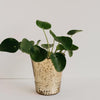 Array Votive Planter