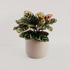 Kendall Ceramic Planter 4""