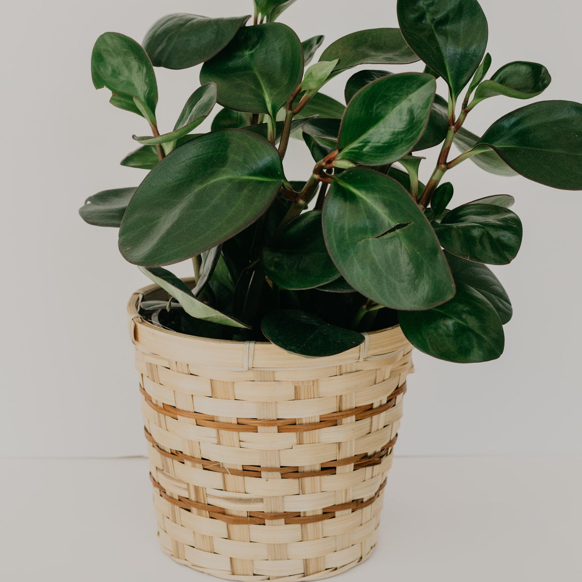 Simona Basket Planter - Medium