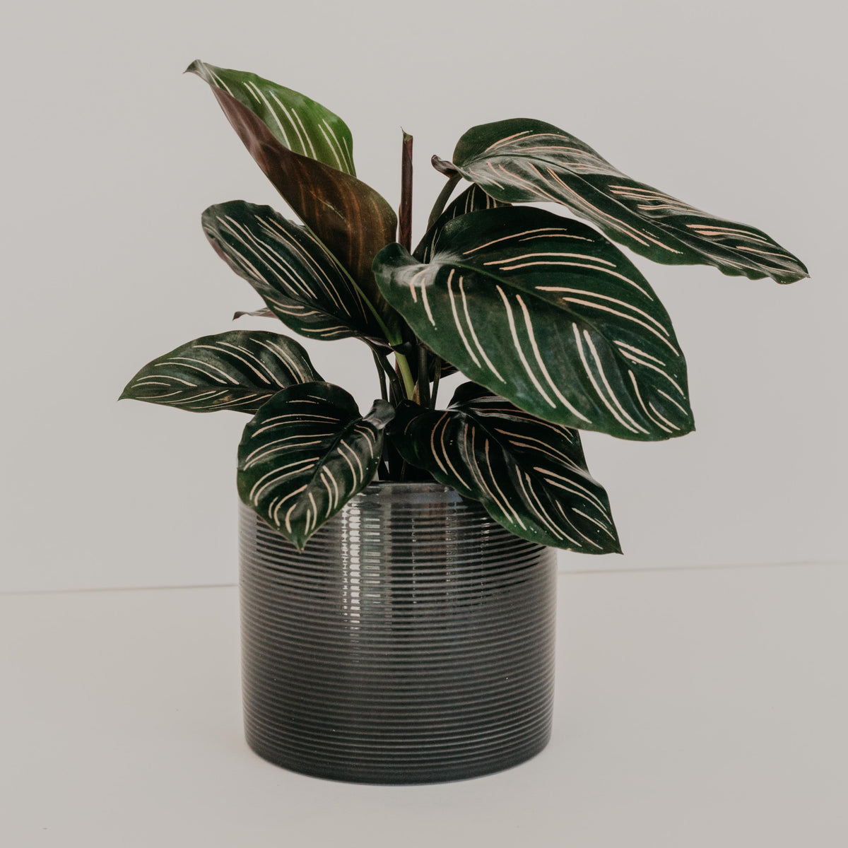 Black Ridged Cylinder Planter