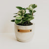 Late Bloomer Wood Planter