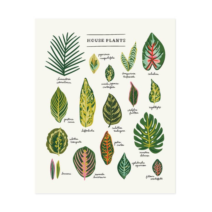 House Plants Art Print - White