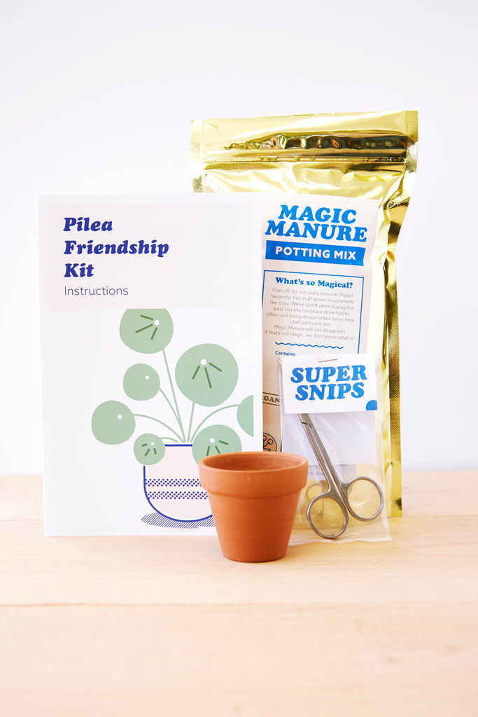 Pilea Friendship Kit