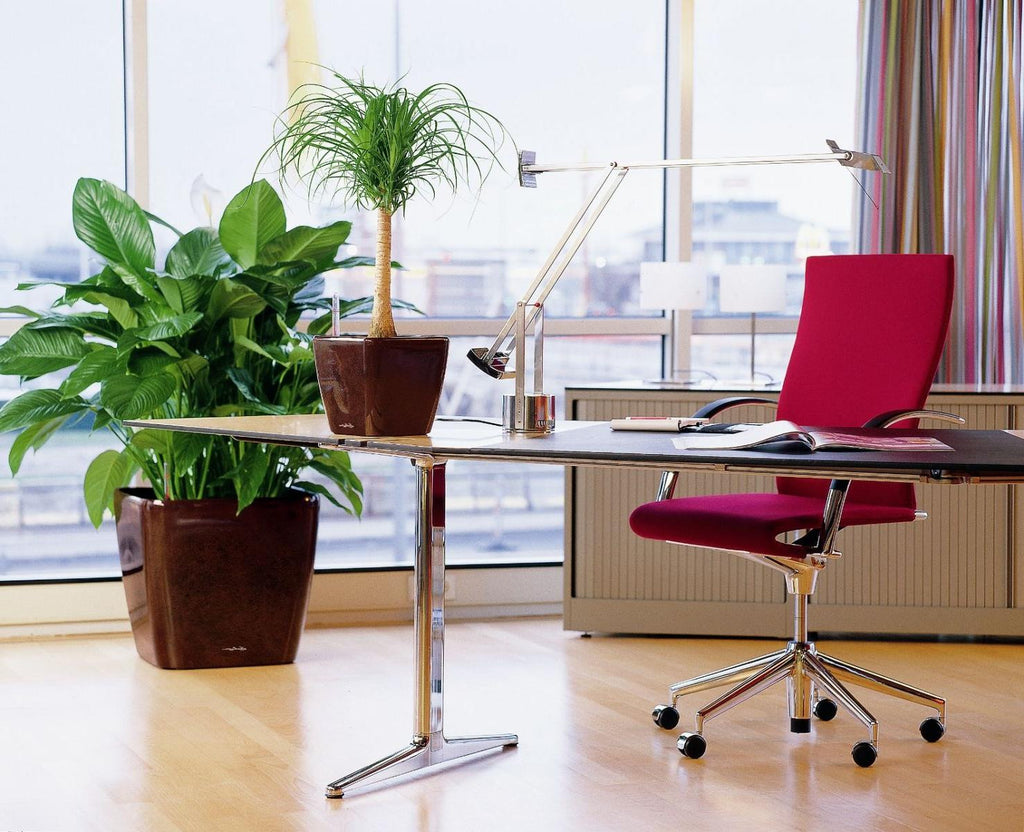 5 Reasons Why Start Up Offices Should Have Plants