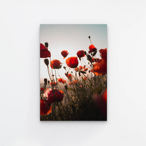 Red Flower Field Canvas