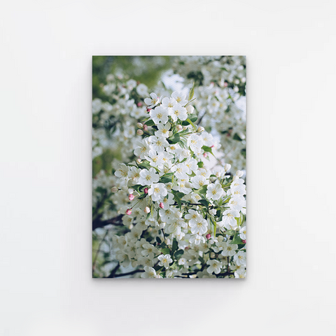 White Cherry Blossom Canvas