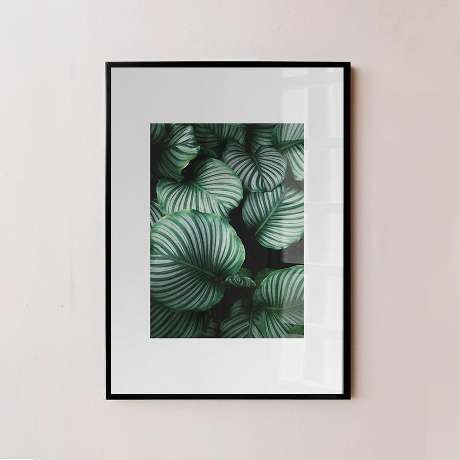 Plant Leaves Frame