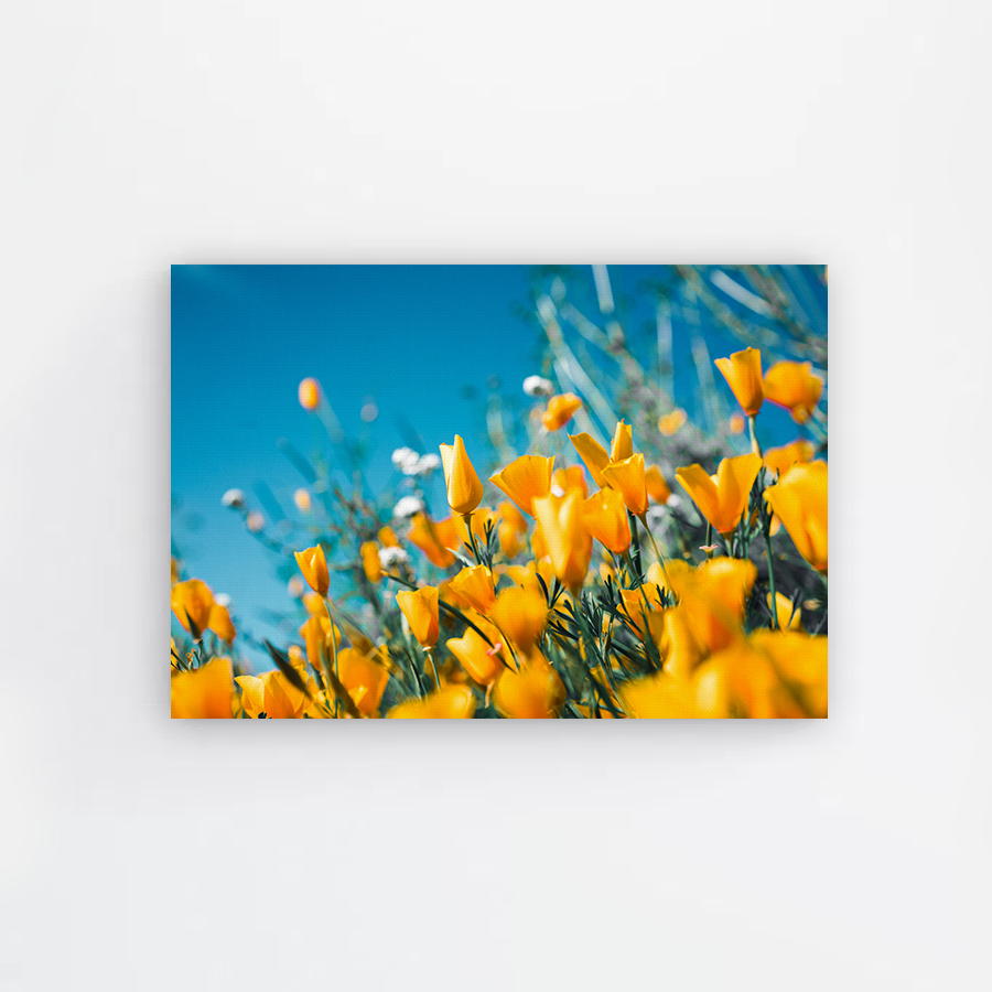 Yellow Spring Canvas