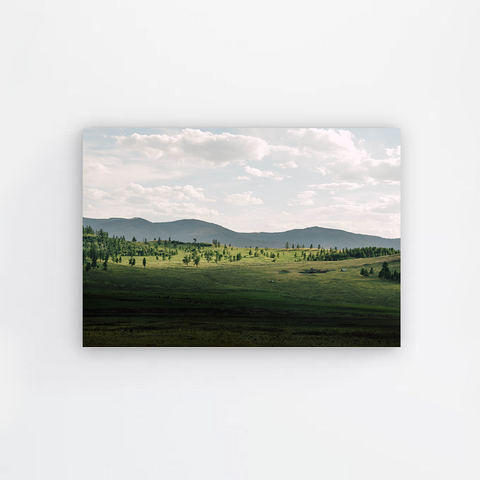 Green Plain Canvas