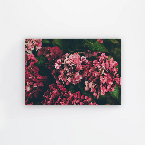 Pink Butterflies Canvas