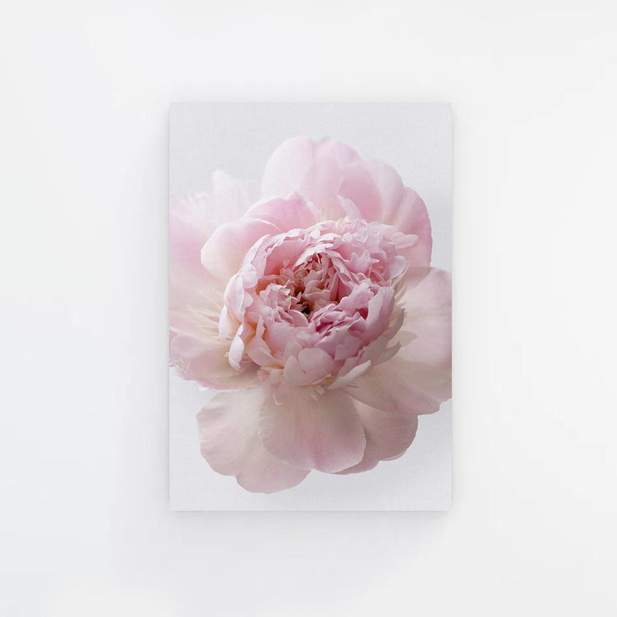 Pinky Peony with Grey Background Canvas