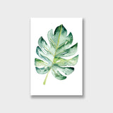 Monstera Illustrator Canvas