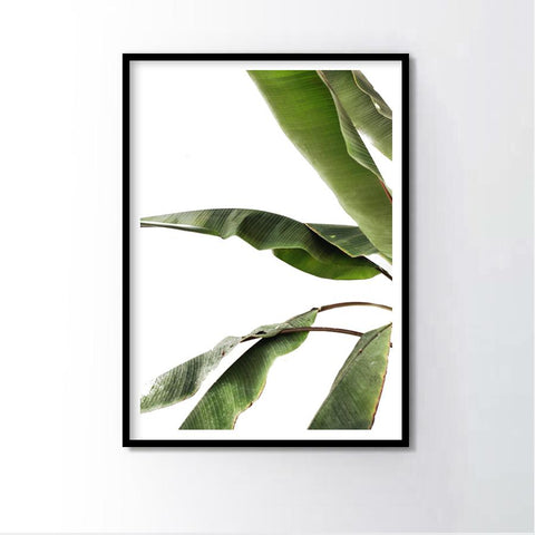Banana Leaf  Frame