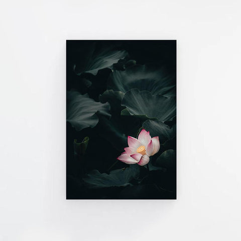 Blooming Lotus Canvas Print