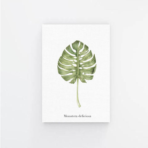 Monstera Deliciosa Canvas Print