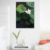 Lotus Blanc Canvas Print
