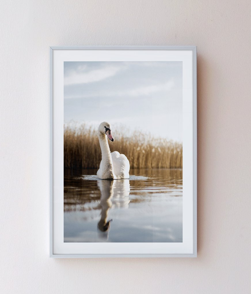 tranh treo tường Swan in peace tại Sonice TPHCM