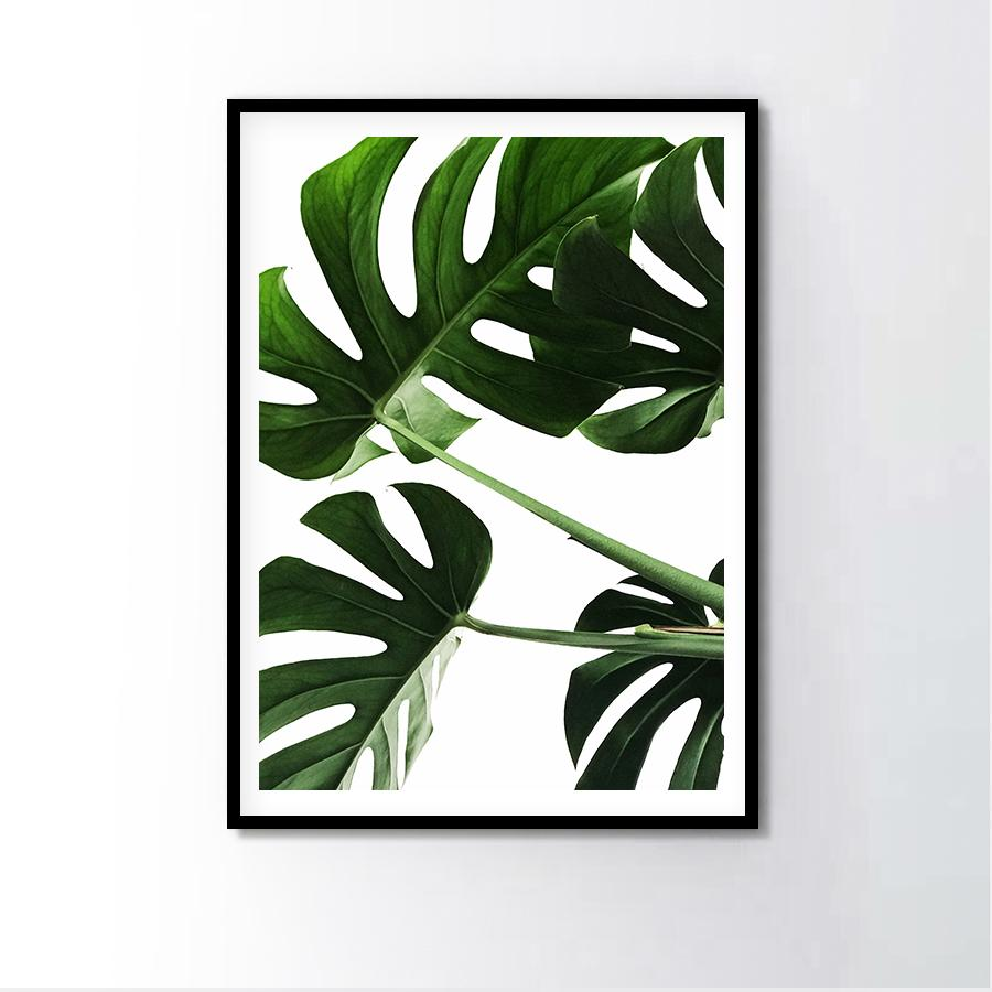 Tiger Claw Monstera Frame