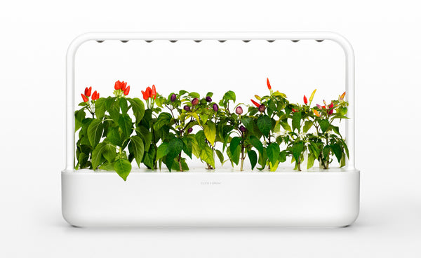 Planting Your Own Indoor Garden: Click and Grow