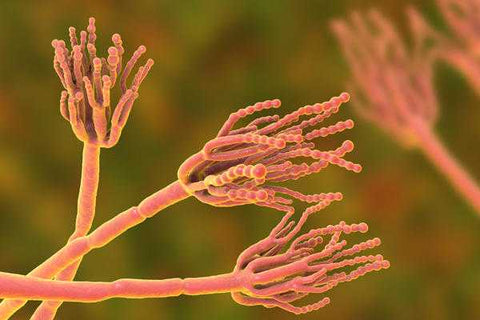 Can Lead to Bacterial and Fungal Growth