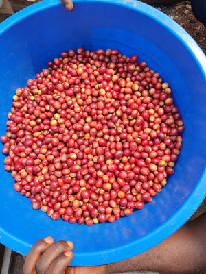 Christmas Coffee - Uganda Bukonzo Dream