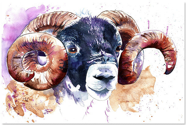 Swaledale Sheep Print