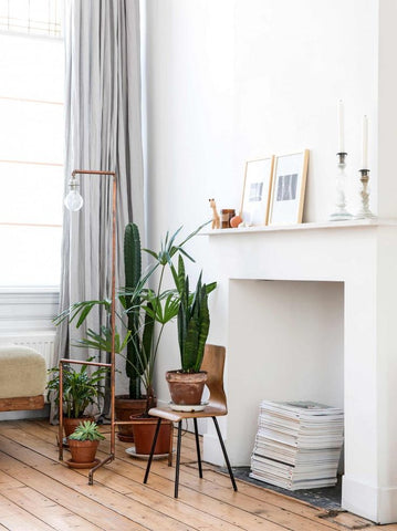 Home Decor Trend: Terracotta and Live Plants