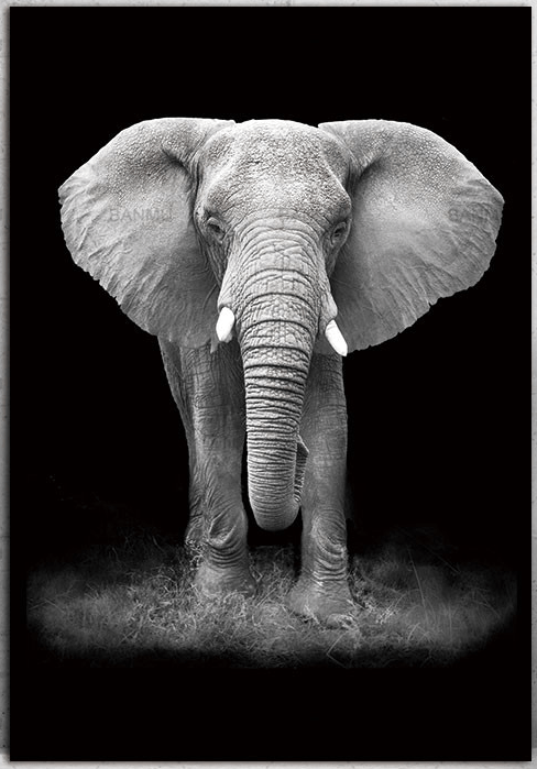 Black And White Animal Photography Wall Artwork Canvas