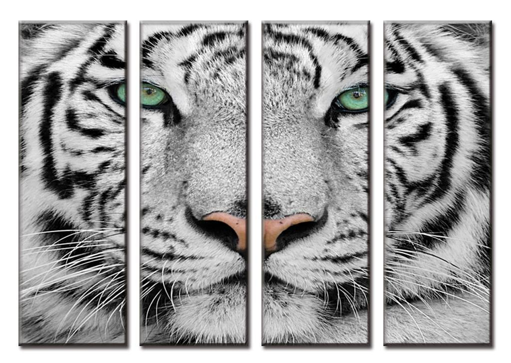 NEW white tiger wall poster 61cm X 91cm PP30282 5
