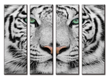 White Tiger Large Canvas Wall Art Set, 4 Panels