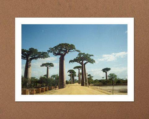 Alley of the Baobabs, Madagascar
