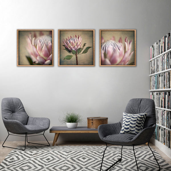 Protea Still - 3x Square Art prints, set 1