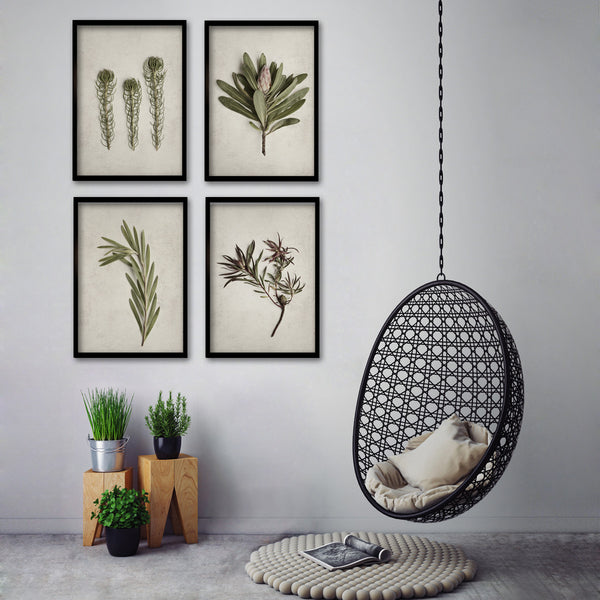 Fynbos Garden Gallery Wall - 4x A2 Art prints