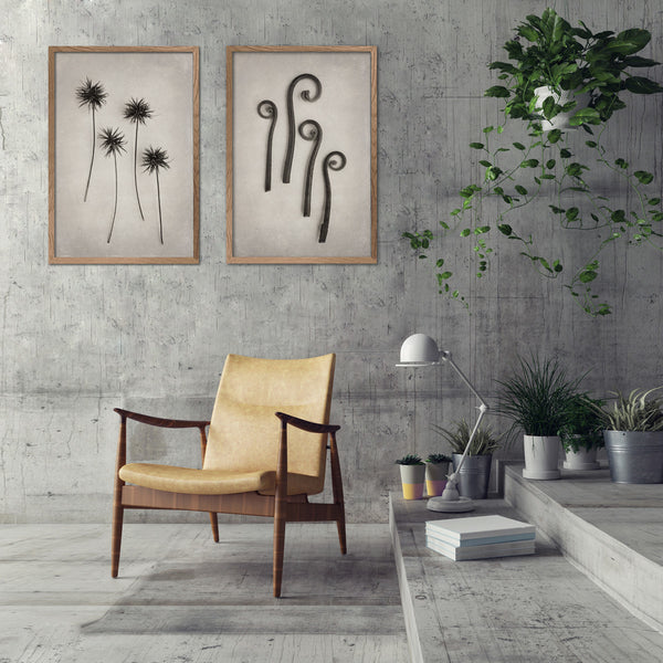 Art Forms in Nature - 2x Large Art prints