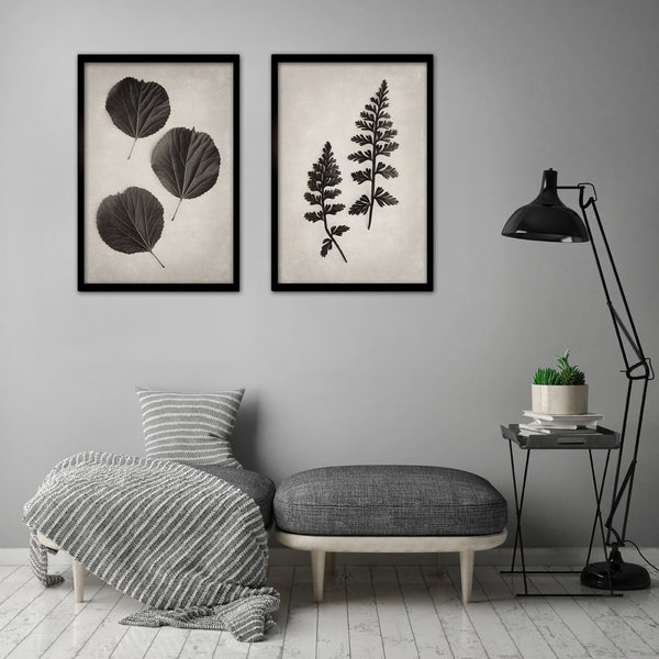 Art Forms in Nature - 2x Large Art prints, set 2