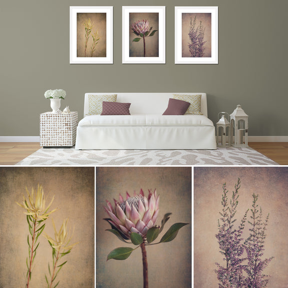 Fynbos and Protea - 3x Large Art prints