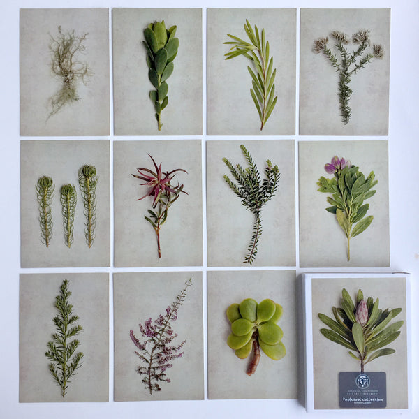 Postcard Collections - Fynbos Garden