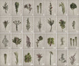 Fynbos Garden Gallery Wall - 8x Art prints, set 2