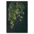 Unframed Art Print - Dark Foliage 1