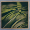 Dark Foliage - 3x Square Art prints
