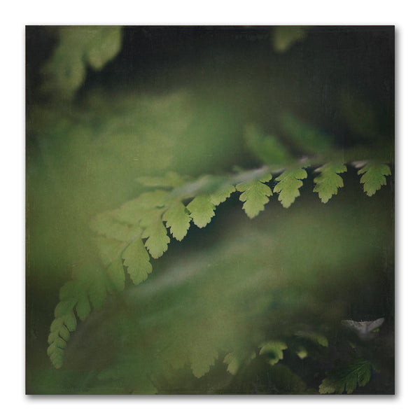 Dark Foliage Square 3