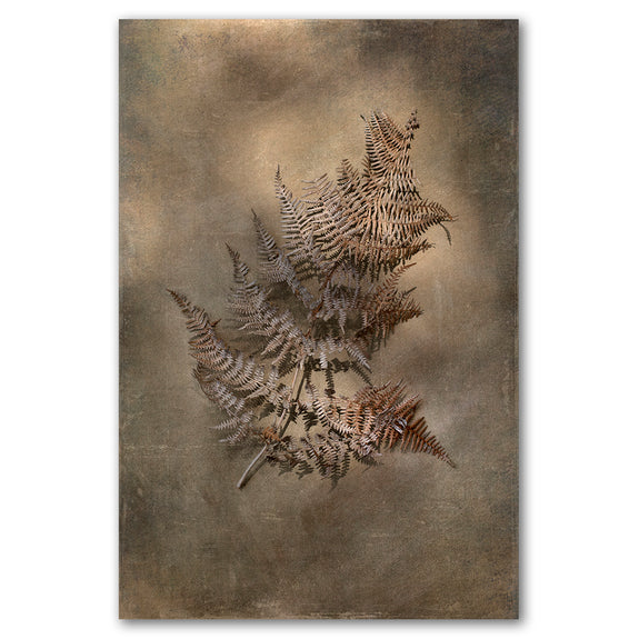 Unframed Art Print - Earthy Ferns 4