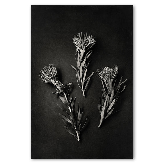 Unframed Art Print - Monochrome Pins 1